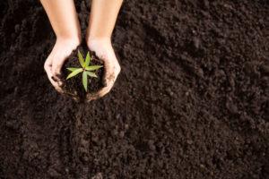 Mãos plantam muda de árvore em terra escura