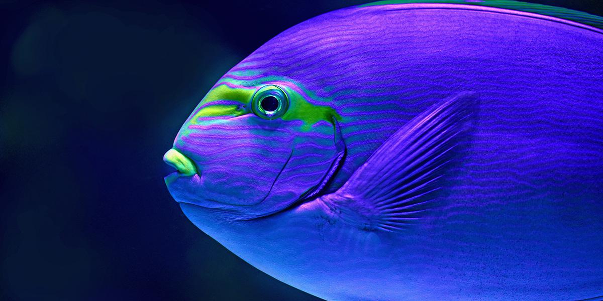 sonhar com peixe 1