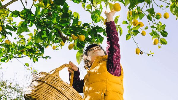 Como manifestar prosperidade na sua vida - menino colhendo laranja na árvore