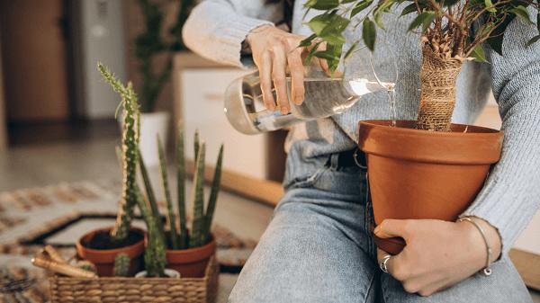 4 Plantas proibidas em casa para dinheiro rápido - mulher regando vaso