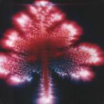 Fotografia do campo energético de uma planta, conhecida como Kirlian. Bruno Gimenes.