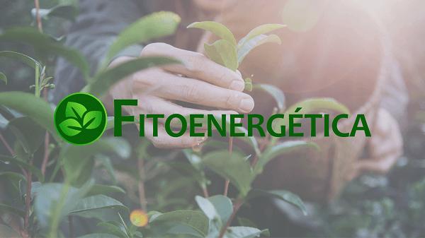 Vidas transformadas pela Fitoenergética - mão colhendo uma planta