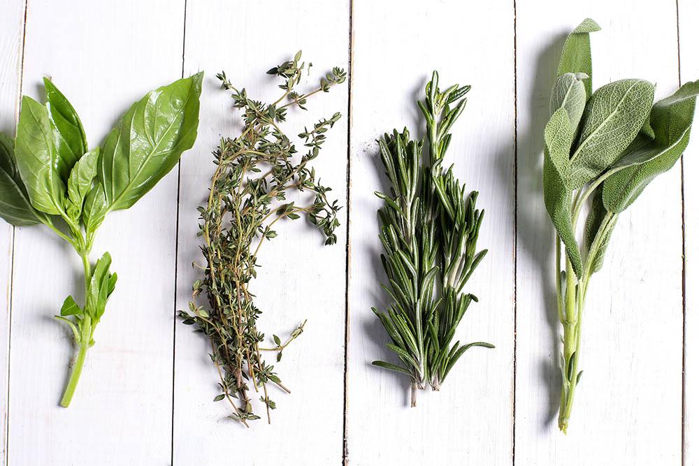 quatro ramos de diferentes plantas dispostos em uma superfície branca - fitoenergética