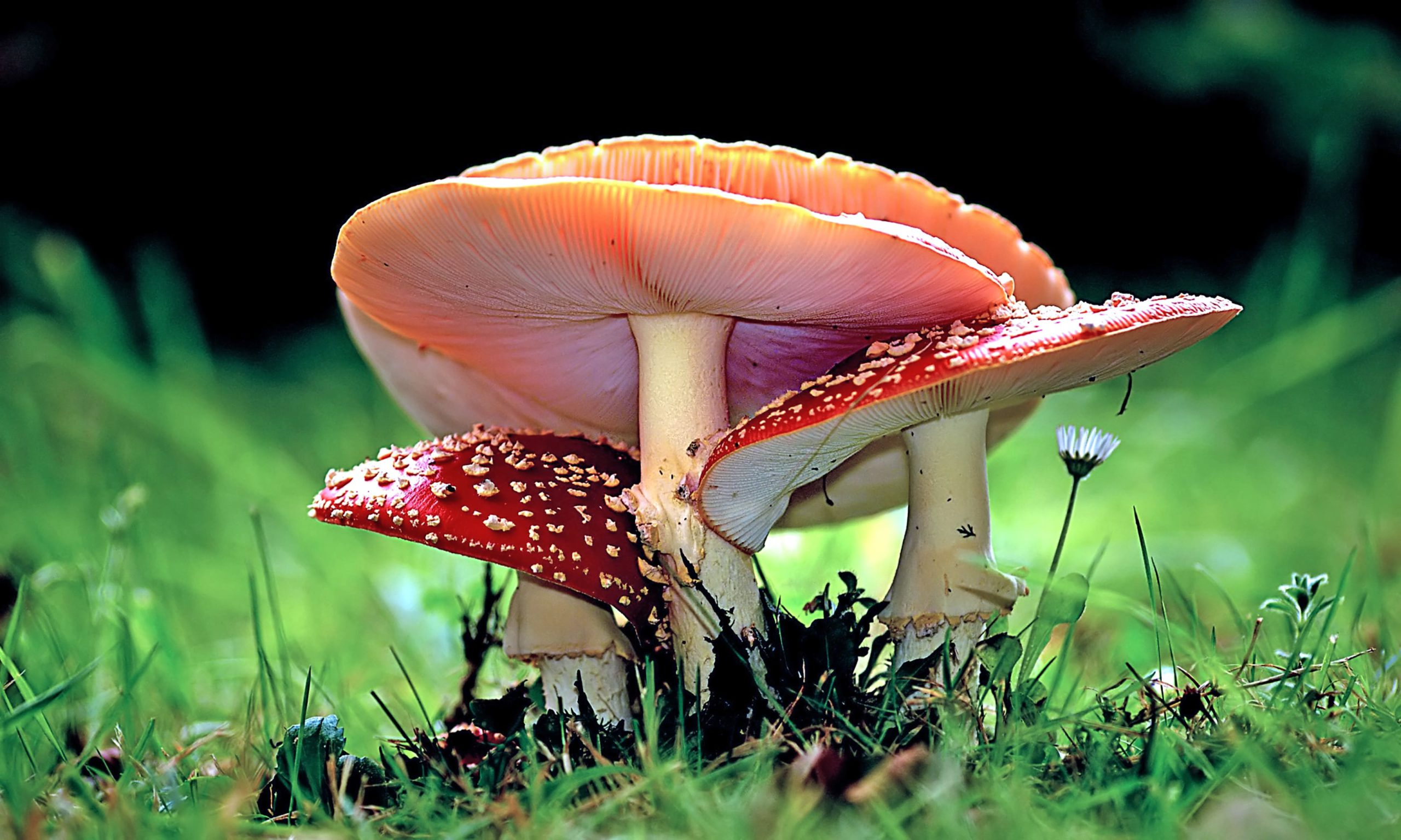 Close em cogumelos
