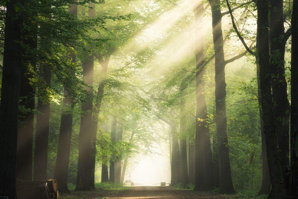 Raios de sol adentram floresta