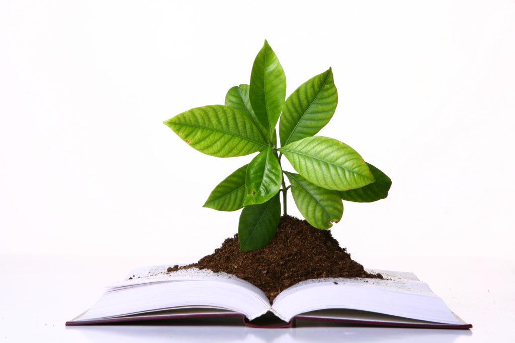 Muda plantada em cima de livro